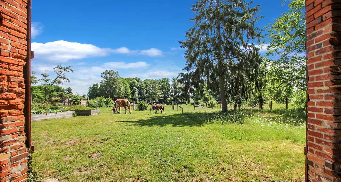 Blick vom Kuadrathof in Kunow auf die benachbarte Pferdekoppel